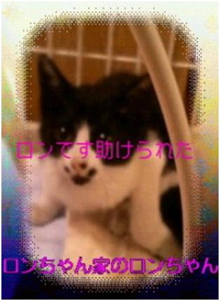 愛媛県松山市保健所野犬捕獲課とは得居獣医の醜い保身と脅し、ミーママとの電話&犬達のsos愛猫写真003