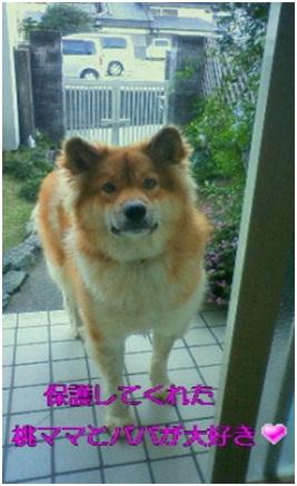 愛媛県松山市保健所野犬捕獲課とは得居獣医の醜い保身と脅し、ミーママとの電話&犬達のsos愛猫写真004