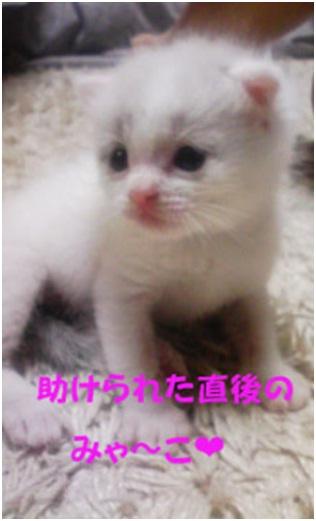 愛媛県松山市保健所野犬捕獲課とは得居獣医の醜い保身と脅し、ミーママとの電話&犬達のsos愛猫写真005