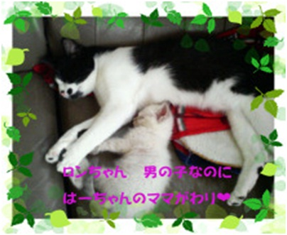 愛媛県松山市保健所野犬捕獲課とは得居獣医の醜い保身と脅し、ミーママとの電話&犬達のsos愛猫写真007