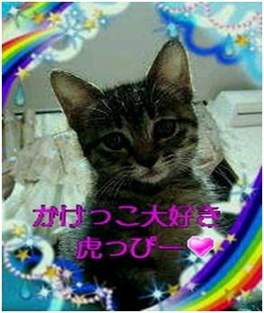 愛媛県松山市保健所野犬捕獲課とは得居獣医の醜い保身と脅し、ミーママとの電話&犬達のsos愛猫写真008