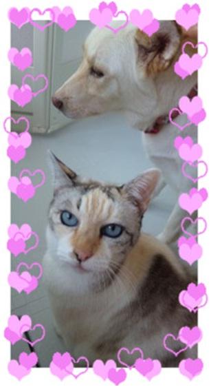 愛媛県松山市保健所野犬捕獲課とは得居獣医の醜い保身と脅し、ミーママとの電話&犬達のsos愛猫写真009