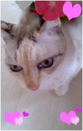 愛媛県松山市保健所野犬捕獲課とは得居獣医の醜い保身と脅し、ミーママとの電話&犬達のsos愛猫写真010