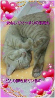 愛媛県松山市保健所野犬捕獲課とは得居獣医の醜い保身と脅し、ミーママとの電話&犬達のsos愛猫写真011