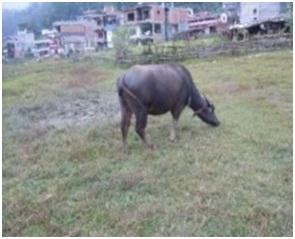 インド・ネパールからただいま☆犬達のSOS のミーママ旅日記& インドの裏通りの犬達2011 006