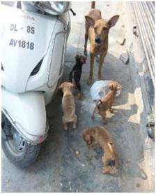 インド・ネパールからただいま☆犬達のSOS のミーママ旅日記& インドの裏通りの犬達2011 009