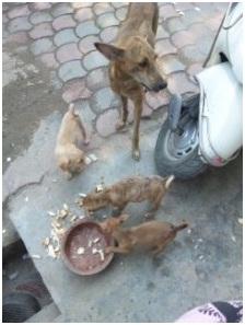 インド・ネパールからただいま☆犬達のSOS のミーママ旅日記& インドの裏通りの犬達2011 010