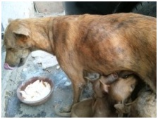 インド・ネパールからただいま☆犬達のSOS のミーママ旅日記& インドの裏通りの犬達2011 011