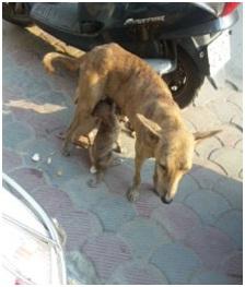 インド・ネパールからただいま☆犬達のSOS のミーママ旅日記& インドの裏通りの犬達2011 012