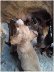インド・ネパールからただいま☆犬達のSOS のミーママ旅日記& インドの裏通りの犬達2011 013
