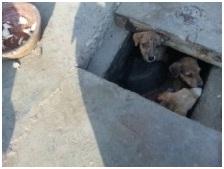 インド・ネパールからただいま☆犬達のSOS のミーママ旅日記& インドの裏通りの犬達2011 014