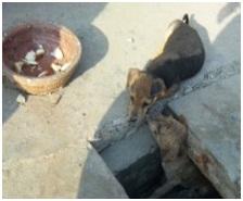 インド・ネパールからただいま☆犬達のSOS のミーママ旅日記& インドの裏通りの犬達2011 015