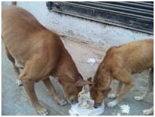 インド・ネパールからただいま☆犬達のSOS のミーママ旅日記& インドの裏通りの犬達2011 016