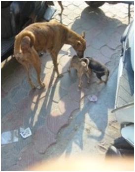インド・ネパールからただいま☆犬達のSOS のミーママ旅日記& インドの裏通りの犬達2011 017