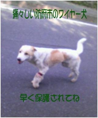 愛媛県動物愛護センターとは?捕獲側の公務員がドイツナチスの強制収容毒ガス室を現代に再現犬達SOS008