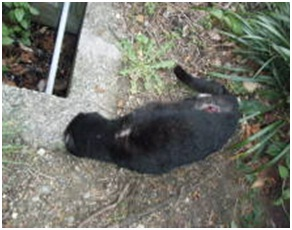 愛媛県動物愛護センターとは?捕獲側の公務員がドイツナチスの強制収容毒ガス室を現代に再現犬達SOS016