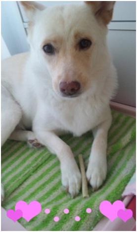 ★犬達のSOSミーママ、トルコ旅マンマミーア番外編★アドリブがあればガイドブックはいらない008