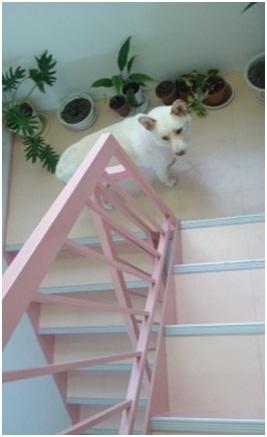 ★犬達のSOSミーママ、トルコ旅マンマミーア番外編★アドリブがあればガイドブックはいらない010