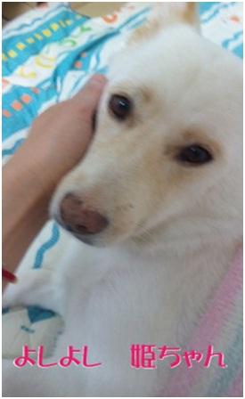 犬達のSOS★福島県で保護されたものの行き場のない犬猫を救うためのミッション★ミーママより005