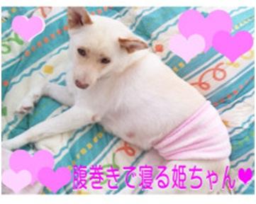 犬達のSOS★福島県で保護されたものの行き場のない犬猫を救うためのミッション★ミーママより006