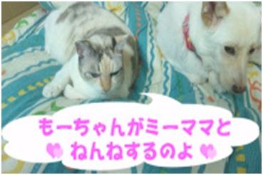 犬達のSOS★福島県で保護されたものの行き場のない犬猫を救うためのミッション★ミーママより007