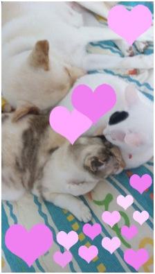 犬達のSOS★福島県で保護されたものの行き場のない犬猫を救うためのミッション★ミーママより008