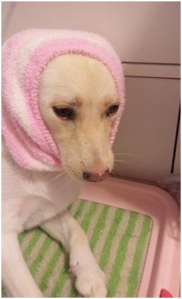 殺処分なんてさせないと頑張る熊本市動物愛護センターへ犬達のSOSの皆からクリスマスプレゼント①002