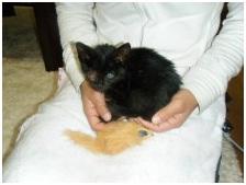 殺処分なんてさせないと頑張る熊本市動物愛護センターへ犬達のSOSの皆からクリスマスプレゼント①004