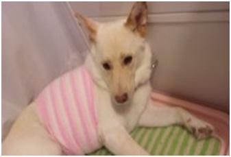 殺処分なんてさせないと頑張る熊本市動物愛護センターへ犬達のSOSの皆からクリスマスプレゼント①007