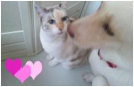 殺処分なんてさせないと頑張る熊本市動物愛護センターへ犬達のSOSの皆からクリスマスプレゼント②003