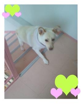 殺処分なんてさせないと頑張る熊本市動物愛護センターへ犬達のSOSの皆からクリスマスプレゼント②004