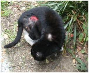 愛媛県松山総合公園とは?虐待をあおる看板が数々!石を投げられ死んだ白猫や両耳をそがれた猫がいます005