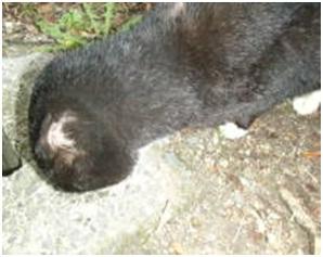 愛媛県松山総合公園とは?虐待をあおる看板が数々!石を投げられ死んだ白猫や両耳をそがれた猫がいます006