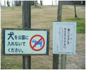 愛媛県松山総合公園とは?虐待をあおる看板が数々!石を投げられ死んだ白猫や両耳をそがれた猫がいます012