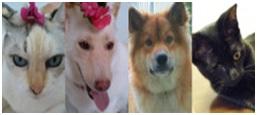 『犬達のSOS』今年もよろしくお願い致します。004