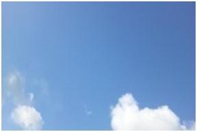 山口県防府市役所とは?生活安全課と防府保健所、犬捕獲担当職員獣医と公務員の嘘と妨害の数々!010