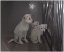 山口県防府保健所は野良犬は子犬も含め全て大山獣医が殺処分に回していましたが、支所長さんが動かれた001