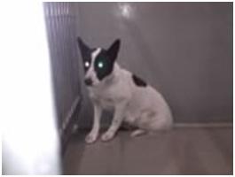 山口県防府保健所は野良犬は子犬も含め全て大山獣医が殺処分に回していましたが、支所長さんが動かれた002
