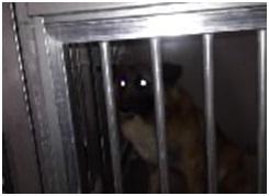 山口県防府保健所は野良犬は子犬も含め全て大山獣医が殺処分に回していましたが、支所長さんが動かれた004