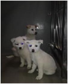 山口県防府保健所は野良犬は子犬も含め全て大山獣医が殺処分に回していましたが、支所長さんが動かれた005