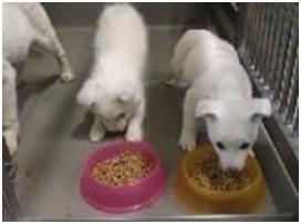 山口県防府保健所は野良犬は子犬も含め全て大山獣医が殺処分に回していましたが、支所長さんが動かれた006