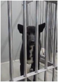 山口県防府保健所は野良犬は子犬も含め全て大山獣医が殺処分に回していましたが、支所長さんが動かれた007