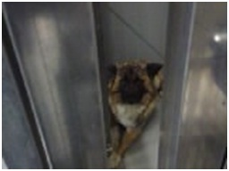 山口県防府保健所は野良犬は子犬も含め全て大山獣医が殺処分に回していましたが、支所長さんが動かれた010