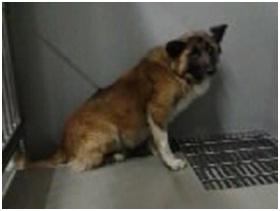 山口県防府保健所は野良犬は子犬も含め全て大山獣医が殺処分に回していましたが、支所長さんが動かれた011