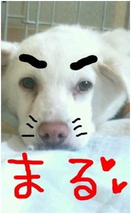 山口県の方針は野良犬は子犬も今まで全匹殺処分されましたが今回助けられた犬たち&モーおばあちゃん001