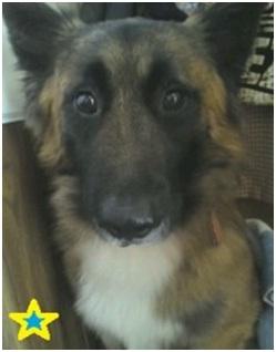 山口県の方針は野良犬は子犬も今まで全匹殺処分されましたが今回助けられた犬たち&モーおばあちゃん002
