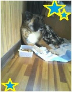 山口県の方針は野良犬は子犬も今まで全匹殺処分されましたが今回助けられた犬たち&モーおばあちゃん004