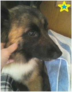 山口県の方針は野良犬は子犬も今まで全匹殺処分されましたが今回助けられた犬たち&モーおばあちゃん005