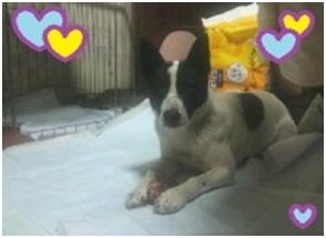 山口県の方針は野良犬は子犬も今まで全匹殺処分されましたが今回助けられた犬たち&モーおばあちゃん006
