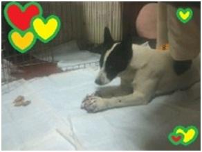 山口県の方針は野良犬は子犬も今まで全匹殺処分されましたが今回助けられた犬たち&モーおばあちゃん007